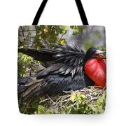 Magnificent Frigatebird Galapagos Tote Bag