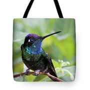 Magnificent Hummingibrd Male Tote Bag