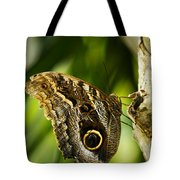 Magnificent Owl Butterfly Tote Bag