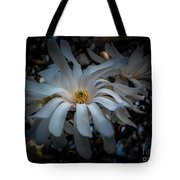 Magnoila Tree Blossum Tote Bag