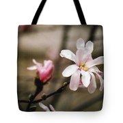 Magnolia Blooms Tote Bag