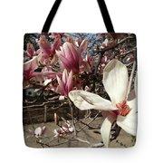 Magnolia Branches Tote Bag