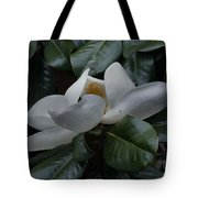 Magnolia In Full Bloom Tote Bag