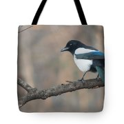 Magpie Perched On Twig Tote Bag