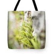 Maiden-hair Spleenwort Tote Bag