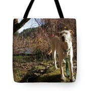 Maisie On A Rock Tote Bag