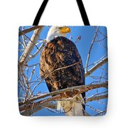 Majestic Bald Eagle Tote Bag by Greg Norrell