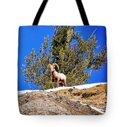 Majestic Big Horn Sheep Tote Bag