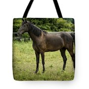 Majestic Stallion Horse In A Pasture Tote Bag