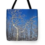Majestic Sycamore In Winter Tote Bag