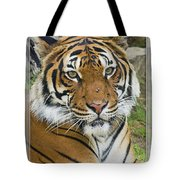 Malayan Tiger 1 Tote Bag