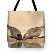 Male And Female Eurasian Blackcap Tote Bag