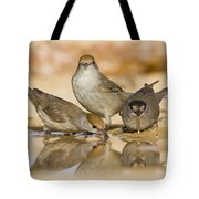Male And Female Eurasian Blackcaps Tote Bag