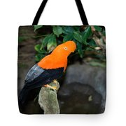 Male Andean Cock-of-the-rock Tote Bag