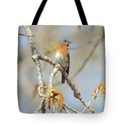 Male Bluebird In Budding Tree Tote Bag