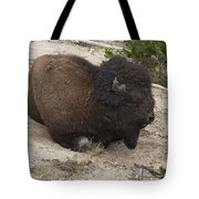 Male Buffalo At Hot Springs Tote Bag