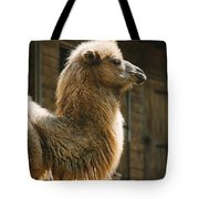 Male Camel Head Tote Bag