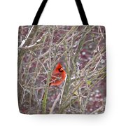 Male Cardinal Cold Day 2 Tote Bag