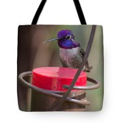 Male Costa Hummingbird Tote Bag