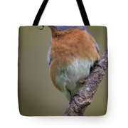 Male Eastern Bluebird With Spider Tote Bag