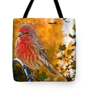 Male Finch In Autumn Leaves Tote Bag