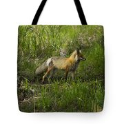 Male Fox   #3521 Tote Bag