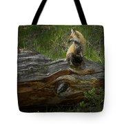 Male Fox   #3575 Tote Bag
