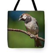 Male House Sparrow Perched In A Tree Tote Bag