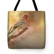 Male Housefinch Looking Up Tote Bag