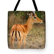 Male Impala With Horns Tote Bag