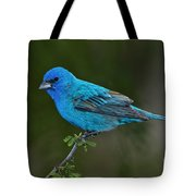 Male Indigo Bunting Tote Bag