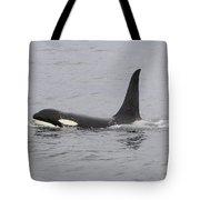 Male Killer Whale Tote Bag