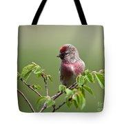 Male Lesser Redpoll  Carduelis Cabaret Tote Bag