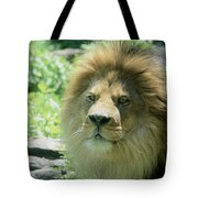 Male Lion Up Close Tote Bag