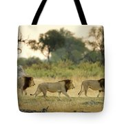 Male Lions At Dawn, Moremi Game Tote Bag