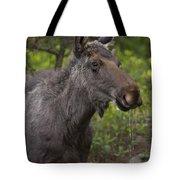 Male Moose   #5696 Tote Bag