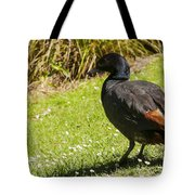 Male Paradise Duck Tote Bag