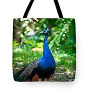 Male Peacock Tote Bag