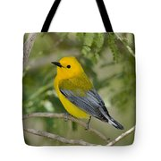 Male Prothonotary Warbler Tote Bag