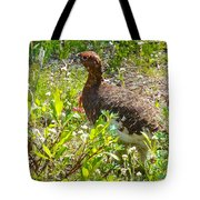 Male Ptarmigan Along Savage River Trail In Denali Np-ak Tote Bag