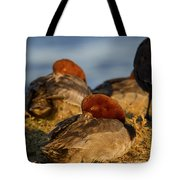 Male Readhead Duck Tote Bag
