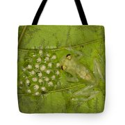 Male Reticulated Glass Frog  Guarding Tote Bag
