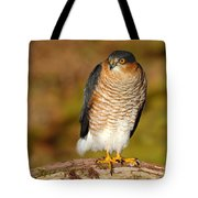 Male Sparrowhawk Tote Bag