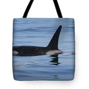 Male Transient Orca In Monterey Bay 11-10-13 Tote Bag