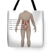 Male Urinary System Tote Bag