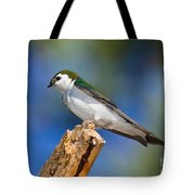 Male Violet-green Swallow Tote Bag