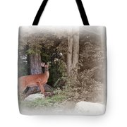Male Whitetail Deer Tote Bag