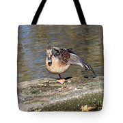 Mallard Duck Stretch  Tote Bag