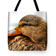 Mallard Hen Close Up Tote Bag
