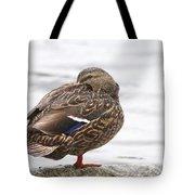 Mallard In The Rain Tote Bag
